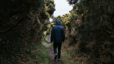 Walking in the outdoors can relax you and free your mind of stress