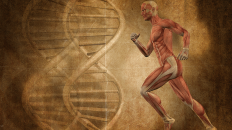 Your genes also determine the effectiveness of each particular exercise program (Image: Shutterstock)
